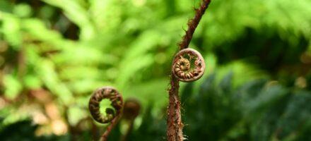 brown wood fern spirals shame and porn spiral